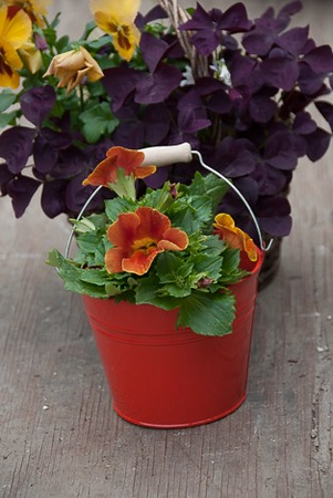 Mimulus Farm Bucket