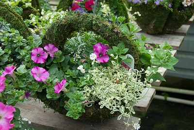 Moss Wall Basket are just too darn cute!