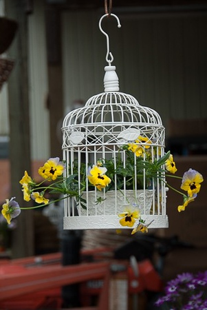 Vintage Bird Cage of Color