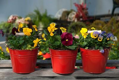 Farm Bucket of Color Color Color!