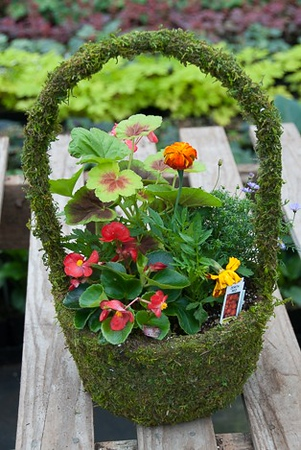 Large Moss Basket of color!
