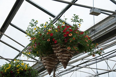 Wicker Cone Hanging Baskets are very unique!