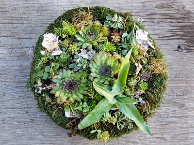 "Wreath Living - 16"" Rd filled with Sedums & Succulents."