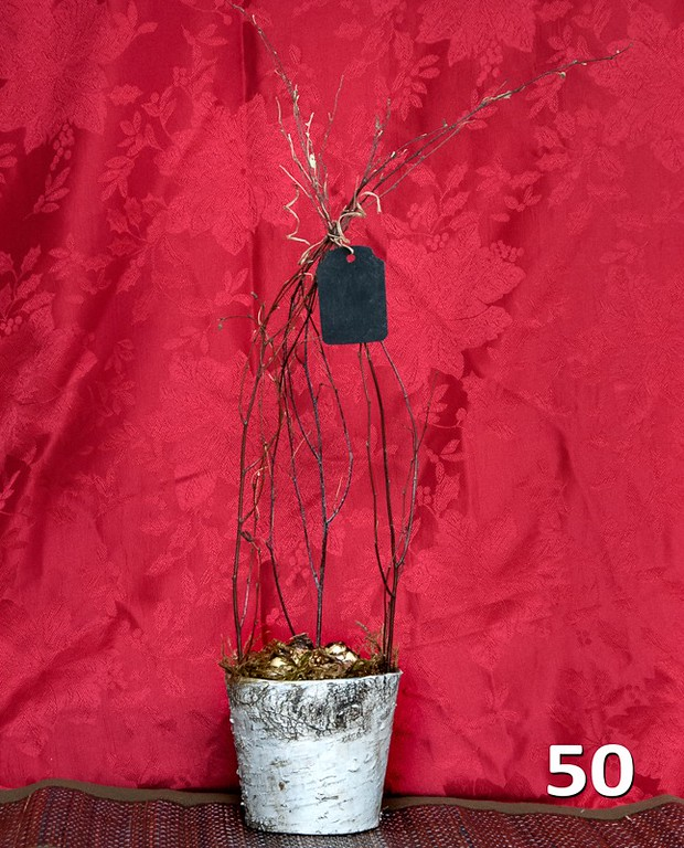 #50 - Paperwhites in zinc line birch pot with birch twig TP and chalkboard gift tag. Makes a great gift.