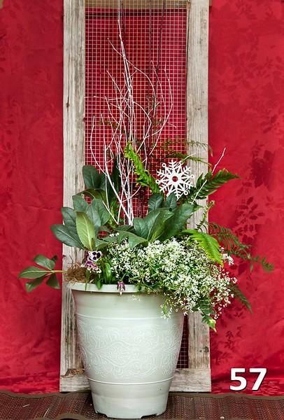 """#57 - 14"""" winter color planter."""