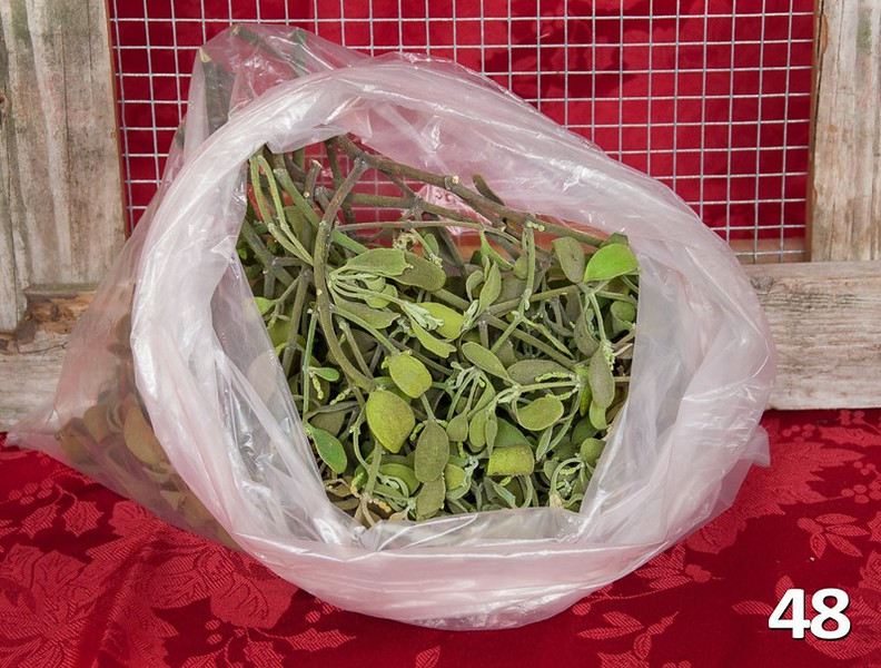#48 - Mistletoe by pound. Sold in one pound increments.