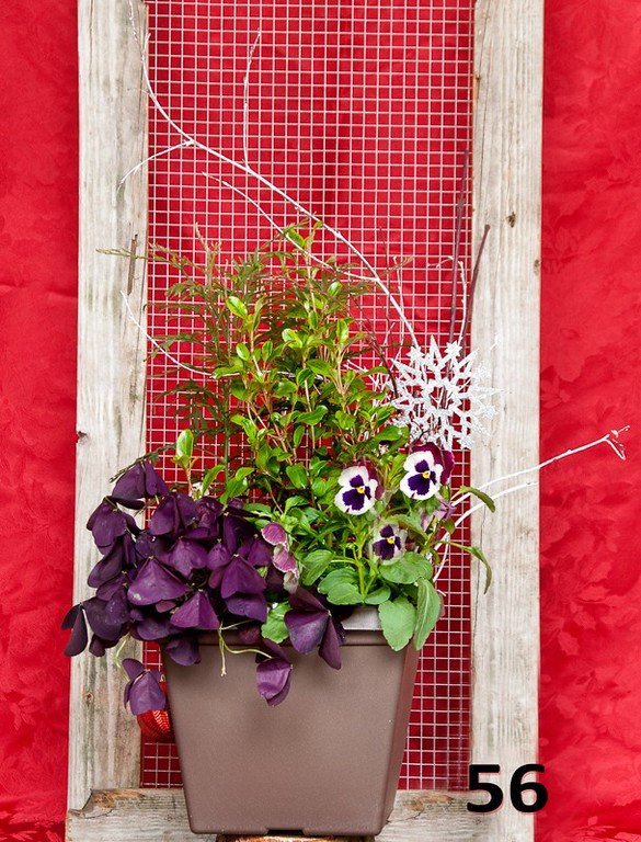 "#56 - 10"" winter color planter.<br>"