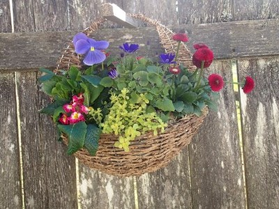Wicker Wall Basket with Color
