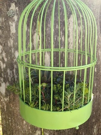 Small Bird Cage with Succulents