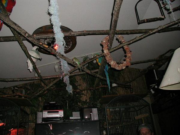 4th Album of Past Parrots Rescues in our Sanctuary
