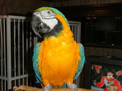 6th  Album of Past Parrots Rescues in our Sanctuary