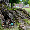 A fairy garden is nestled in the roots of a tree on Bestor Plaza Thursday, June 30, 2016.