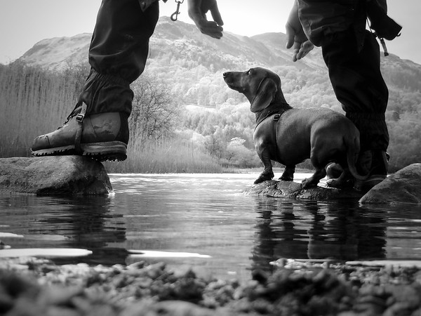 Man's Best Friend 2nd Place Winner, Emma Williams ©, UK