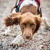 Assistance Dogs and Dog Charities 2nd Place Winner, Caroline Bridges ©, UK