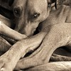 I Love Dogs Because... (under 18) 3rd Place Winner, Chris Faulkner ©, UK