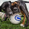 Dogs at Play 1st Place Winner, Art Burasz ©, UK