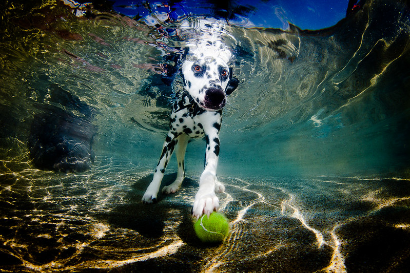 Judges Mention, Dogs at Play, Rodrigo Alvarado ©, Australia