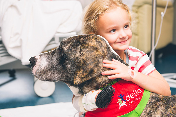 Judges Mention, Assistance Dogs and Dog Charities, Kelly Miller ©, Australia
