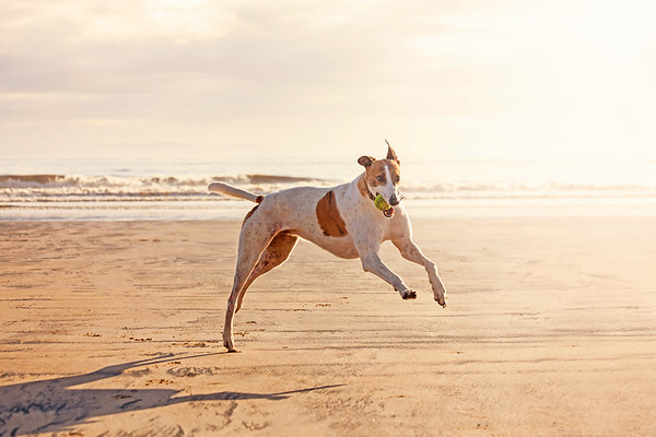 Judges Mention, Dogs at Play, Alexandra Robins ©, UK