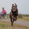 Assistance Dogs and Dog Charities 1st Place Winner Ruud Lauritsen, Netherlands