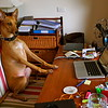 Judges Mention, Dogs at Work, Jura Cullen ©, UK