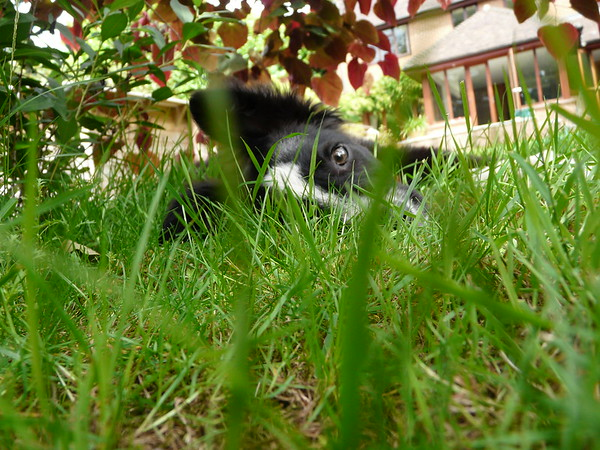 Judges Mention, I Love Dogs Because... (under 18), Jennifer Ballerino ©, UK