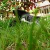 Judges Mention, I Love Dogs Because... (under 18) Jennifer Ballerino, UK