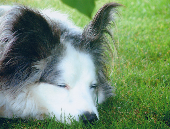 I Love Dogs Because... (under 16) 2nd Place Winner, Rosie Anness ©, UK