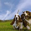 Dogs at Play 3rd Place Winner, Eileen Sutherland ©, UK