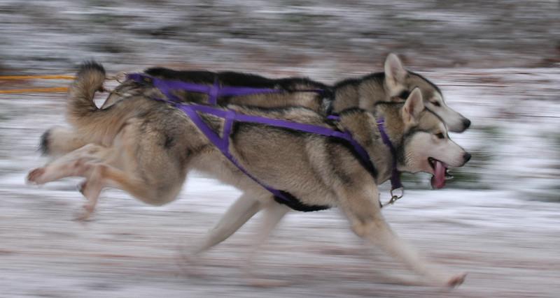 Dogs at Work 2nd Place Winner, Paul Walker ©, UK