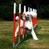 Dogs at Work 5th Place Winner, Bob Ratcliffe ©, UK