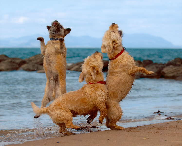 Dogs at Play 1st Place Winner, Paul Walker ©, UK