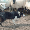Dogs at Work 4th Place Winner, William Harris ©, UK