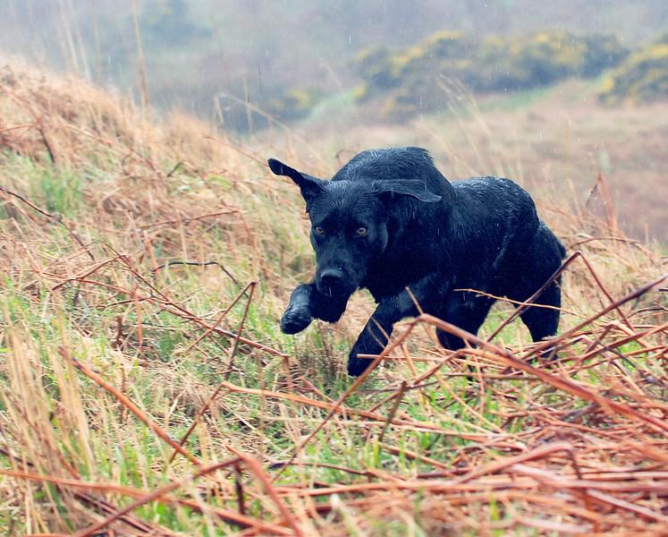 Dogs at Work 5th Place Winner, Paul Walker ©, UK