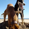 Dogs at Play 3rd Place Winner, Liana Phillips ©, UK