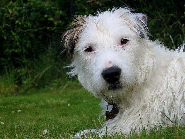 I Love Dogs Because... (under 16) 3rd Place Winner, Pippa Lyon ©, UK
