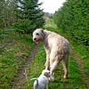 Overall Winner / Dogs at Play 1st Place Winner, Tina Otto ©, UK