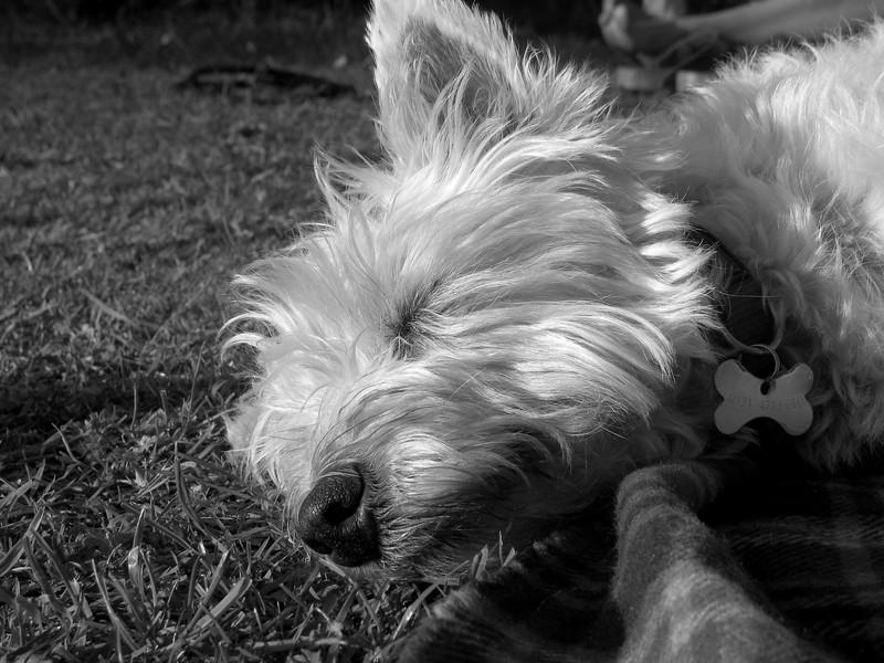 I Love Dogs Because... (under 16) 4th Place Winner, Georgina Webster ©, UK