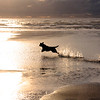 Dogs at Play 2nd Place Winner, Gail Johnson ©, UK
