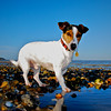 I Love Dogs Because... (under 16) 4th Place Winner, David Hewett ©, UK