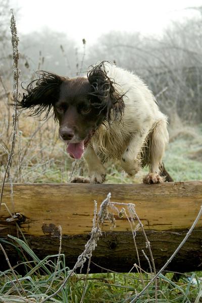 Dogs at Work 4th Place Winner, Andrew Biggar ©, UK
