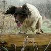 Dogs at Work 4th Place Winner, Andrew Biggar ©, UK
