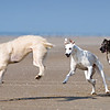 Dogs at Play 1st Place Winner, Angharad Qwenter ©, UK