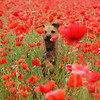 Overall Winner / I Love Dogs Because... (under 16's) 1st Place Winner, Jennie Shelton ©, UK