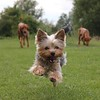 Dogs at Play 5th Place Winner, Lucinda Seamonds, © UK