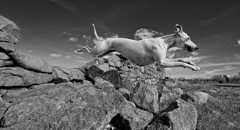 Dogs at Work 4th Place Winner, Robert Patefield, © UK