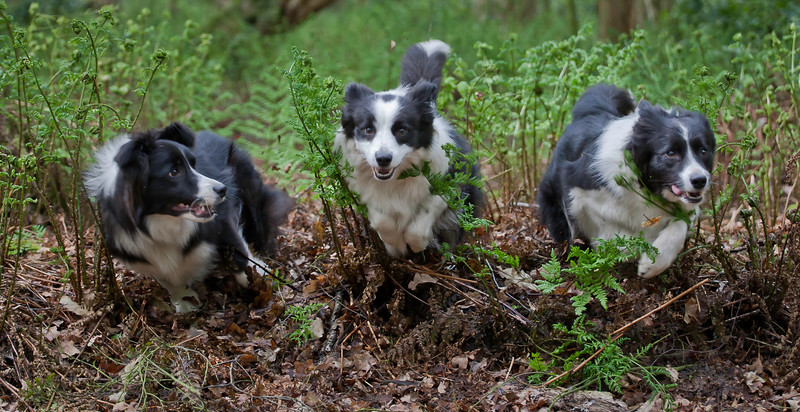 Dogs at Play 3rd Place, Andy Biggar, © UK