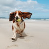 Dogs at Play 1st Place Winner, Doug Jewell ©, UK