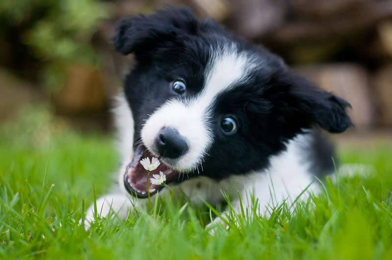 Puppies 1st Place Winner, Rhian White ©, UK