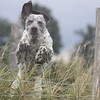 I Love Dogs Because... (under 16) 3rd Place Winner, Joshua Carter ©, UK
